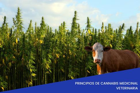 Descubre los beneficios del uso del Cannabis en la medicina veterinario