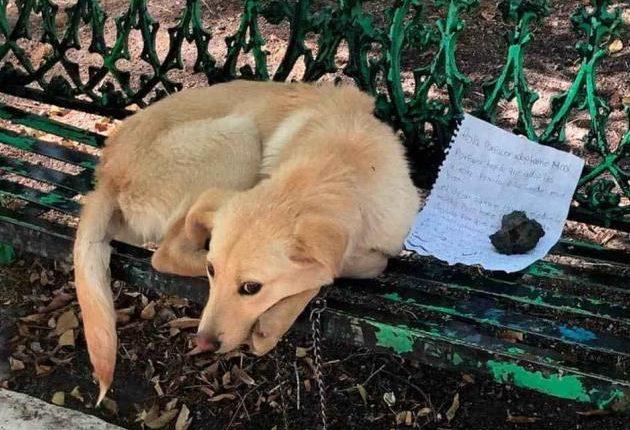 Niño deja una nota para que adopten a su perro