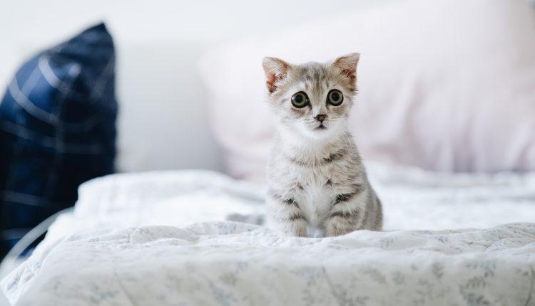 ¿Por qué nos gusta ver videos de gatos en internet?