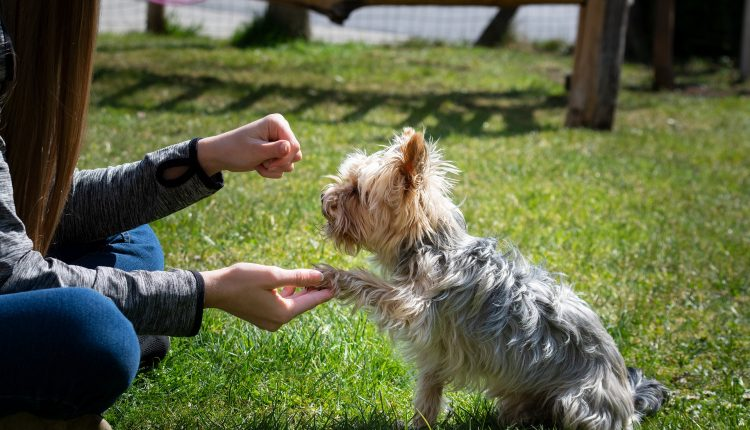 ¿Cómo enseñar a tu perro a dar la pata?