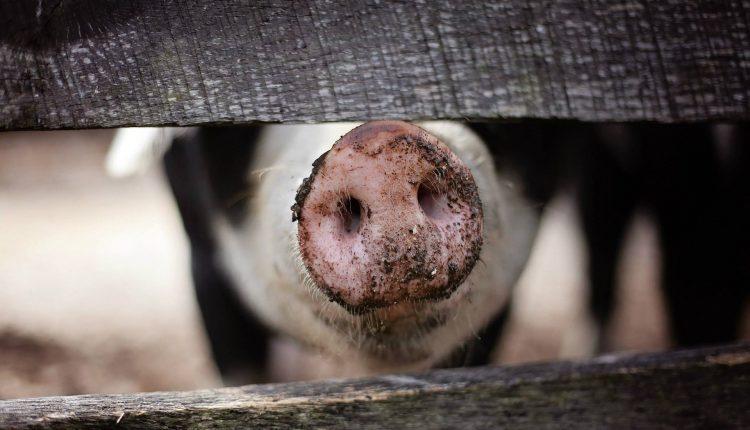 Animales que respiran por el ano…si, eso existe
