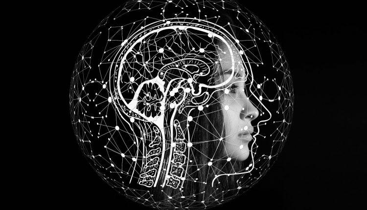 El cerebro se parece más a los testículos que a cualquier otro órgano