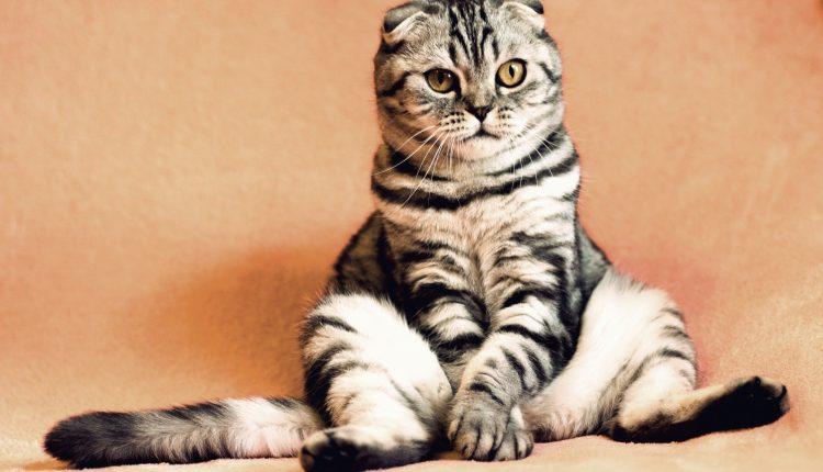 8 datos sobre los gatos confirmados por la ciencia