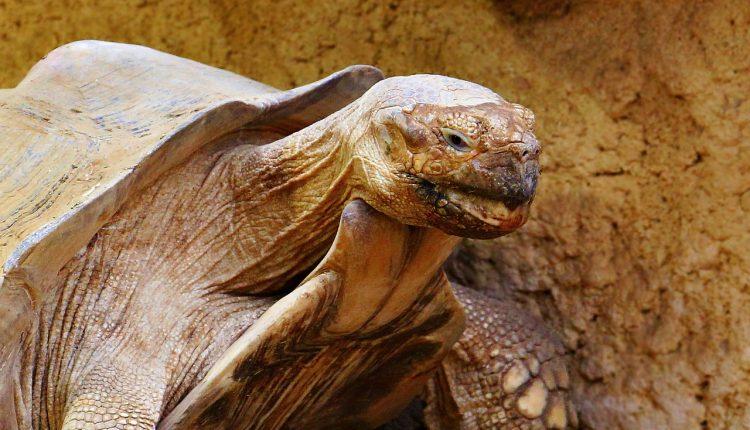¿Por qué las tortugas viven tanto tiempo?