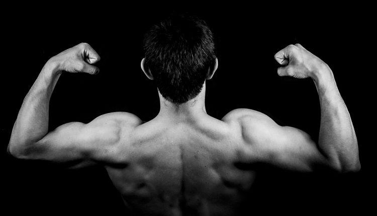 Modelo matemático predice entrenamiento para ganar músculo
